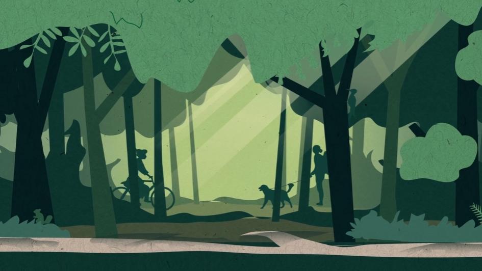 Staatsbosbeheer: houtkap